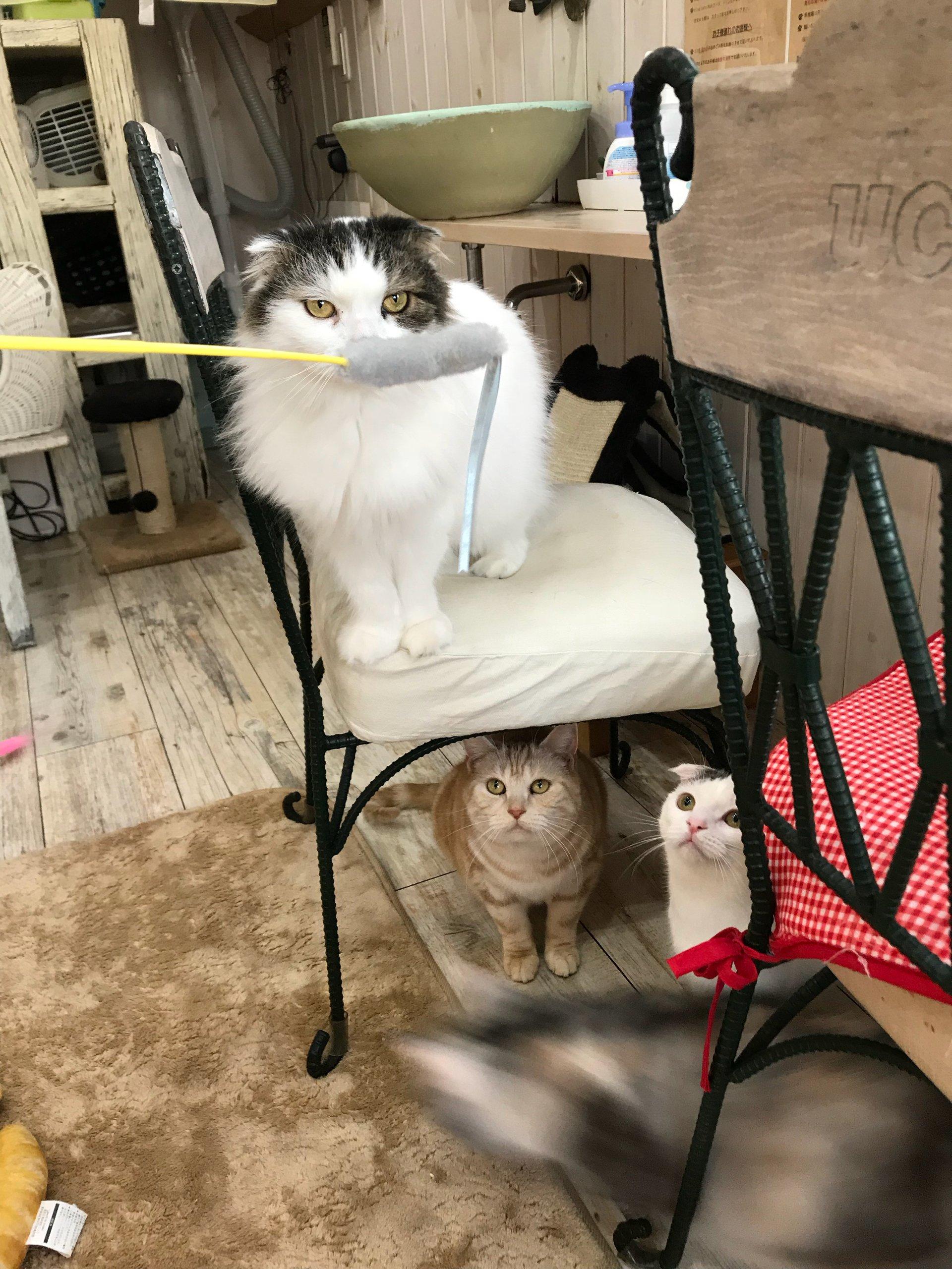 福島市鎌田のカフェ・トリコ *猫Cafe*「猫と木(ぼく)」