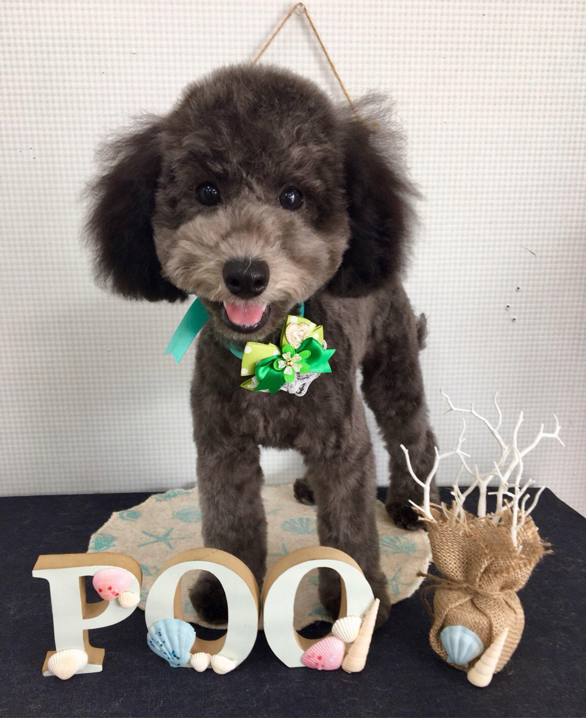 犬の美容室Poo│福島市・ペットサロン・ペットホテル・プー
