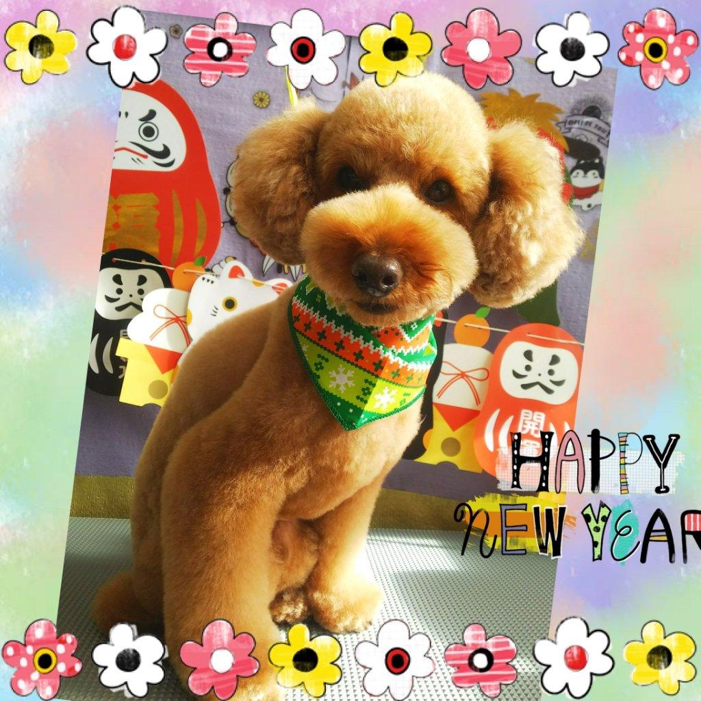 福島市の可愛いペット大集合!   I♥PETs(アイラブペット)