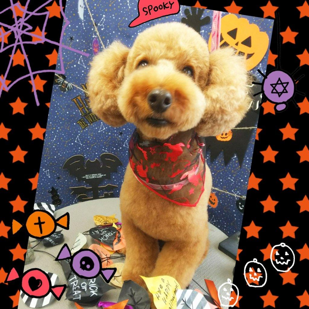 福島市の可愛いペット大集合! | I♥PETs(アイラブペット)